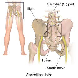 Sacroiliac Joint - Relief from Your Sciatica